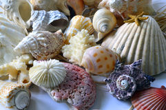 Collection of seashells. Stock Image