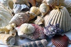 Collection of seashells. Stock Photos
