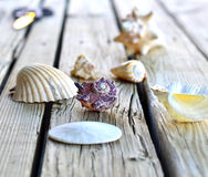 Collection of seashells. Royalty Free Stock Photo