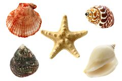 Collection of seashells, isolated Royalty Free Stock Photo