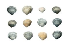 Collection of Seashells isolated on white Background royalty free stock photos