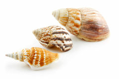 Collection of Seashells Scallop Isolated on White. Background Stock Photos