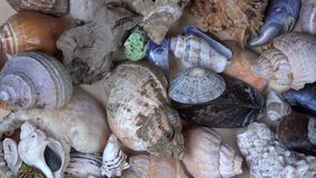 Collection of seashells shell conch cockleshell for backgrounds stock video footage