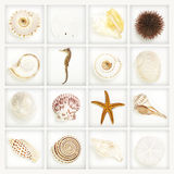 Collection, seashells on white Royalty Free Stock Images