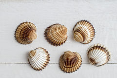 A collection of seashells on a white  background. Stock Photos