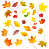 Collection set of beautiful colourful autumn leaves stock image