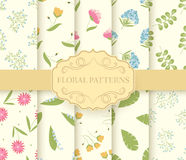 Collection set of floral seamless pattern. leaves, Spring, flowers, summer Royalty Free Stock Image
