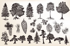 Collection or set of hand drawn trees in engraved style. Big collection or set of hand drawn trees in engraved style Stock Photo
