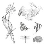 A collection or set of hand drawn vintage styled engraved animals for design Stock Photos