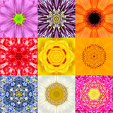 Collection Set Nine Flower Mandalas Various Colors Kaleidoscope Stock Photo