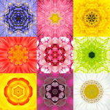 Collection Set Nine Flower Mandalas Various Colors Kaleidoscope Royalty Free Stock Photography