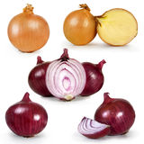 Collection set of onion Stock Image