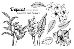 Collection set of Tropical flower and leaves drawing illustration. For invitation and greeting card design.n royalty free illustration