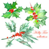 Collection (set) with watercolor Christmas branches of holly tree Royalty Free Stock Photo