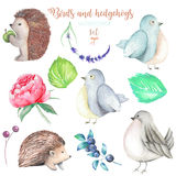 Collection, set of watercolor cute birds, hedgehogs and forest elements. Hand drawn isolated on a white background Royalty Free Stock Photos