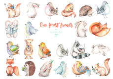 Collection, set of watercolor cute forest animals illustrations. Hand drawn isolated on a white background vector illustration