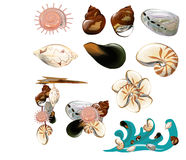 Collection of shell Stock Photography