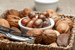 Collection of shelled nuts and nutcracker. Royalty Free Stock Photo