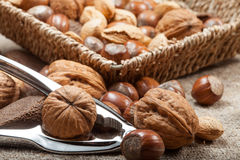 Collection of shelled nuts and nutcracker. Royalty Free Stock Photography