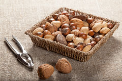 Collection of shelled nuts and nutcracker. Stock Photo