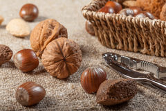 Collection of shelled nuts and nutcracker. Royalty Free Stock Image