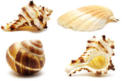 Collection shells Royalty Free Stock Photography