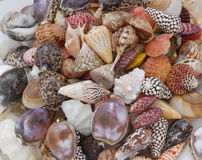 Collection of shells Royalty Free Stock Photography