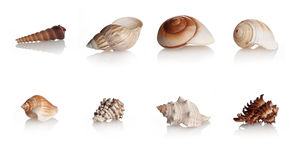 Collection Shells Marine Mollusks Royalty Free Stock Photos