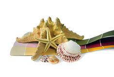 Collection of shells and starfish on top of paint chips Royalty Free Stock Photo