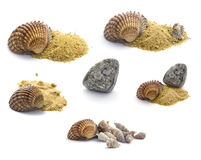 Collection of  shells, stones and sand Stock Photos