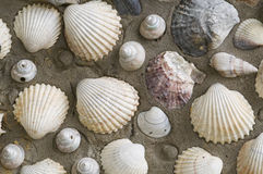 Collection of shells. Stuck on the sand Royalty Free Stock Photos
