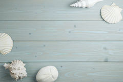 Collection of shells on wood Royalty Free Stock Photos