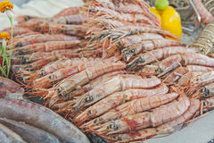 Collection of shrimp on display at seafood restaurant Royalty Free Stock Photo