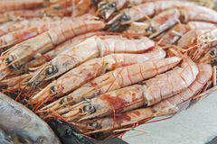 Collection of shrimp on display at seafood restaurant Royalty Free Stock Photos