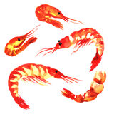 Collection of shrimps, set isolatet, watercolor on white Royalty Free Stock Images