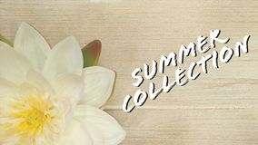 Collection spring summer stock illustration