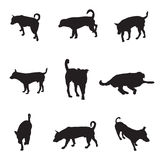 Collection of silhouette dogs, pet vector illustration Stock Photography