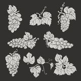 Collection of silhouette grapes, leaves and branches on dark background Stock Photos