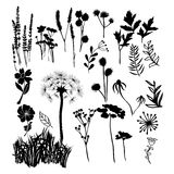 Collection silhouette illustration of wild flowers, herbs and gr. Hand drawn  collection silhouette illustration of wild flowers, herbs and grasses.  Silhouettes Royalty Free Stock Photo