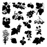 A collection of silhouettes of berries Royalty Free Stock Photography