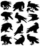 Collection of silhouettes of birds of prey. On a white background Vector Illustration