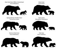 Silhouettes of bears and bear-cubs. Collection of silhouettes of  different species of bears and bear-cubs Royalty Free Stock Image