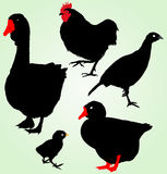 Collection of silhouettes of farm birds Royalty Free Stock Photos