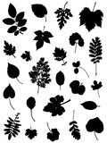 Collection of silhouettes of leaves Stock Image