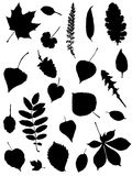 Collection of silhouettes of leaves. On a white background Stock Illustration