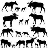 Collection of silhouettes of mooses also named elks and its cubs. Vector illustration royalty free illustration