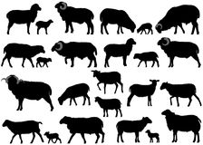 Silhouettes of sheeps Royalty Free Stock Photos