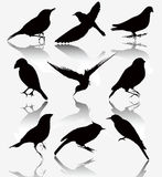 Collection of silhouettes of wild birds, vector il Royalty Free Stock Photography