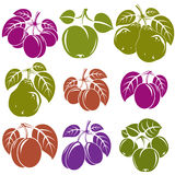 Collection of simple fruits  icons with green leaves, harv. Est season symbols. Apricots, plums, pears, apples and cherries isolated design elements Royalty Free Stock Images