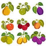 Collection of simple fruits vector icons with green leaves. Harvest season symbols. Apricots, plums, pears, apples and cherries isolated design elements Royalty Free Stock Image